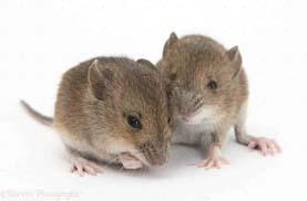 شركة مكافحة فئران