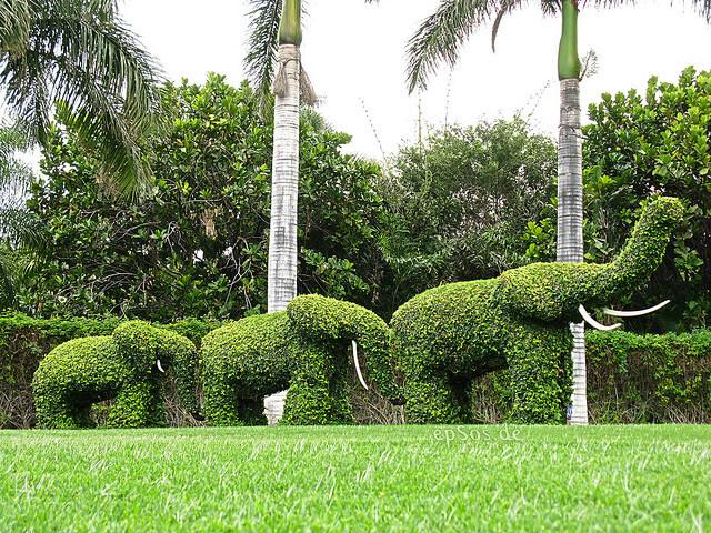 افضل شركة,تنسيق حدائق