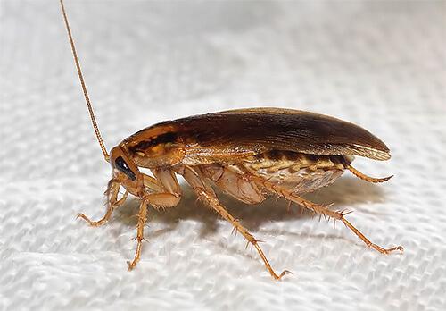 القضاء على الصراصير فى الحمام