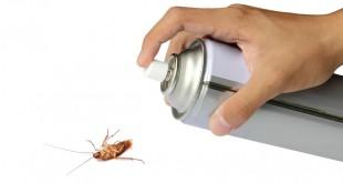 التخلص من الصراصير نهائيا